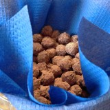 Cocoa dusted hazelnuts
